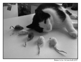 Mouse Adoration by Wodanislav