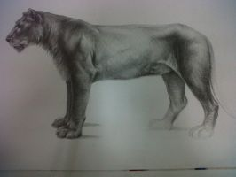 Lion, Pencil by David De Leon Luis by Daviddleonluis