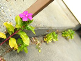 Growing out of the Cracks by iluvobiwan91