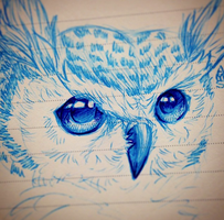 Owl doodle by amberdraws