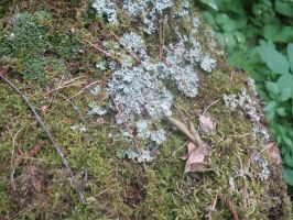Moss and lichens 2 by Garr1971