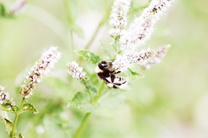 bee.1 by maryieh