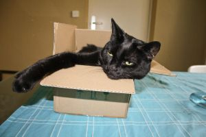 Diva_in_a_box by Catjuschka