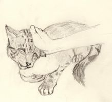 Gilfa the cat by Marlee-S