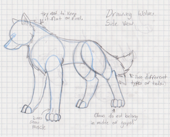 Drawing Wolves 1 by sadaya