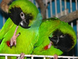 pick n noses by parrots4life