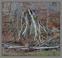 Downed tree fingers. L1040586, with story by harrietsfriend
