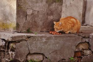 The Cats Of Ruins by LindaMarieAnson