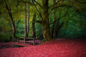 Little Autumn Bridge Stock October 2015 by WelshDragonStockNArt
