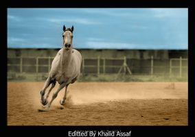 Horse Running Colored by skinnykhalida