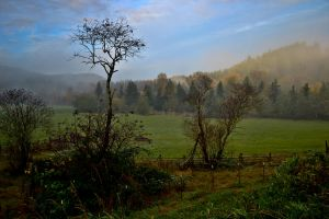 Fall Morning on the Farm by jeruley
