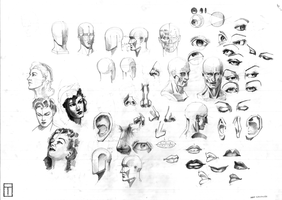 Loomis Head and Features Study by TyphonArt