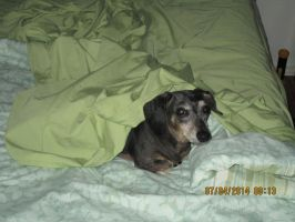 shadow under covers on mom's bed #3 by HomeOfBluAndshadows