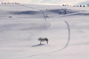 The Skidoo Track by Robin-Hugh