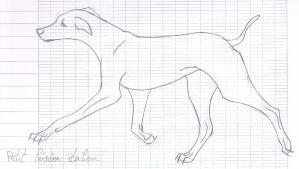 .:Sketch:. small Italian greyhound by licorneor