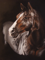 Animals Pastel - Cavall 004 - Cavall appaloosa by arualmk