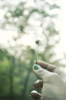 Dandelion Dream by Turqoose