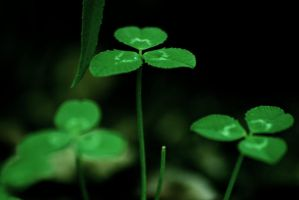Clovers by LePianiste