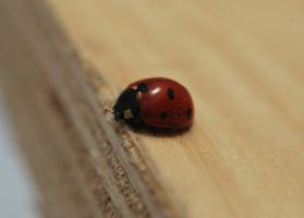 Lady Bug by NateTheKnife