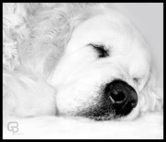 Sleeping dog by Bgranny