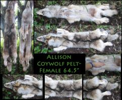 Coywolf Pelt by NightsGem