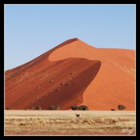 Namib beauties by gastonnerie