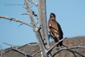 Watcher by melly4260