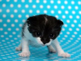 Wallpaper a kitten something.. by hoschie