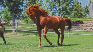 Flame Red Stallion by Valarian-Warrior