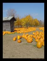 Pumpkin Patch V by kcegraphics