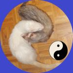 Yin and yang by lilyalex