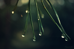After the rain by Vannilaby