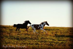 Full Gallop 2 by Kayluuh