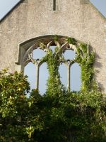Ivy Window 2 by stormsorceress