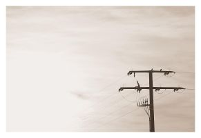 sparrows. by feese