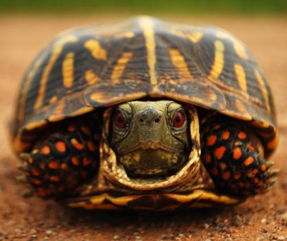 Turtle Turtle by SublimeBudd