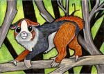 Speculative Zoology - guinea pig by lemurkat