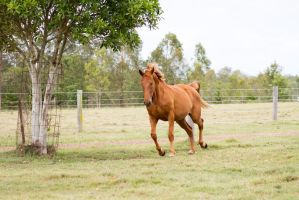 Dn wb trot front 3/4 by Chunga-Stock