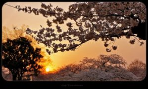 _Japans_Atmosphere_3_ by LadyxWinter