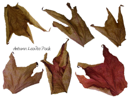 Autumn Leaves Pack by Meta-Stock