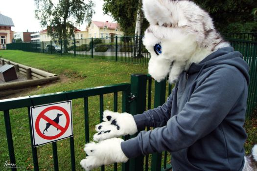 What?! No dogs allowed? by Janziu