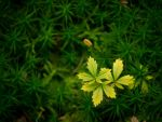 Leafes03 By Aldafea by aldafea