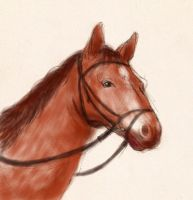 Horse sketch by Abramacabra