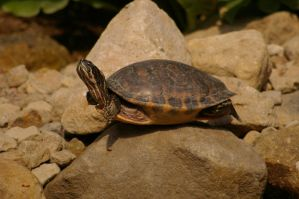 Turtle I by expression-stock