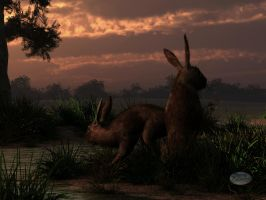 Hares in the Wetlands at Dawn by deskridge
