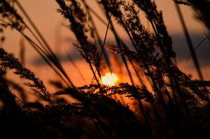 Sunset over grass by dan4815