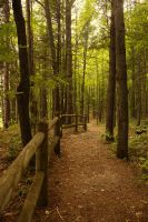Manistee River High Banks (High Rollaways) Forest3 by toshema