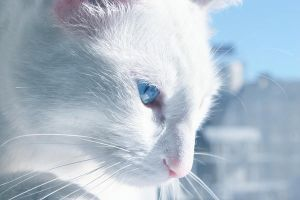 White Cat by Sventine