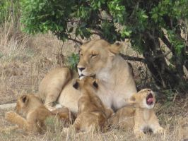 Lioness and Cubs by Aqua-Storme