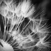 Seeds by Weissglut
